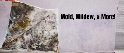 Mold, Mildew, & More!
