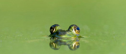 """Eat the Frog"" Time Management"