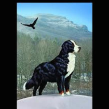 Mountain Dog and Friends