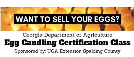 Egg Candling Certification Class