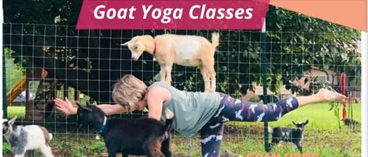 Goat Yoga Classes