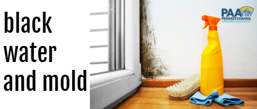 Black Water and Mold