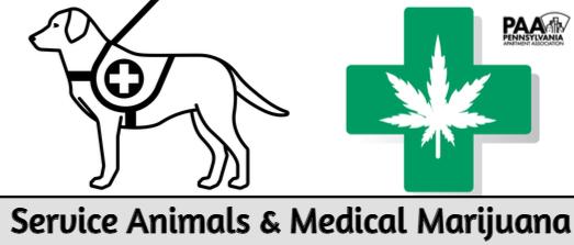 Service Animals and Medical Marijuana