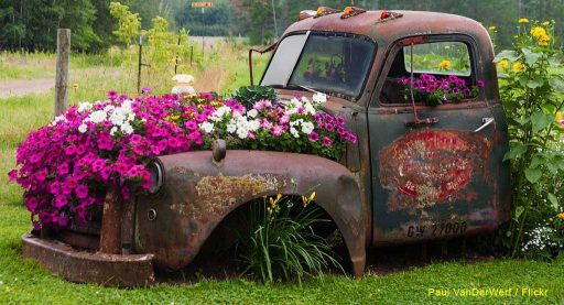 Old truck with flowers growing in it