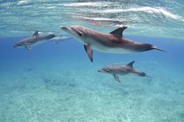Dolphins give each other specific names.